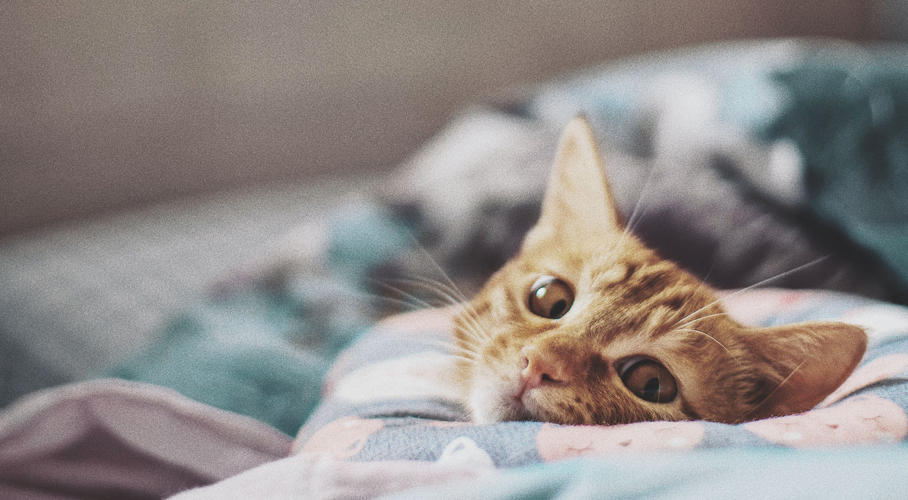 Злобные, летающие и осенние: лучшие мемы про котов за неделю