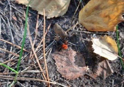 Укус павука може бути дуже болючим і небезпечним