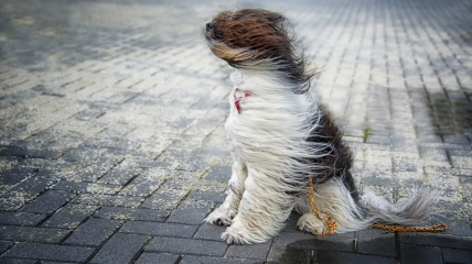 Ветер в Украине будет очень сильным.