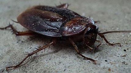 Ученые установили, что тараканы появились раньше динозавров