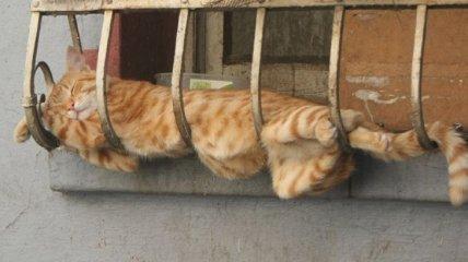 Спасите кошек! Тающие пушистики как результат глобального потепления