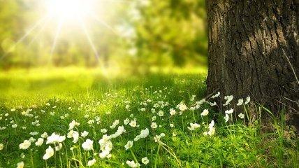 Синоптик дал прогноз на лето: какой месяц будет самым жарким