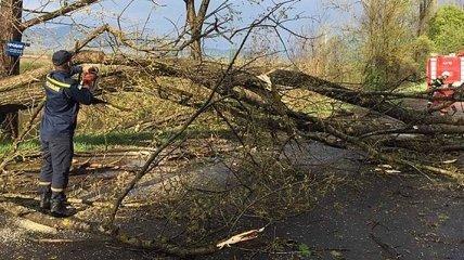 В Украине ожидается штормовой ветер