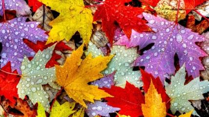 В Украине 14 октября вероятны дожди