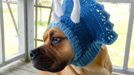 Какая прелесть: вязаные шапочки для любимцев в этой зимой
