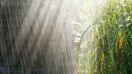 Жару будут сменять грозовые дожди и шквалы ветра: прогноз погоды на 11 августа