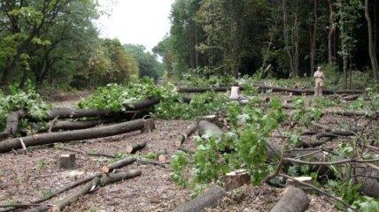 К чему приведет вырубка лесов?