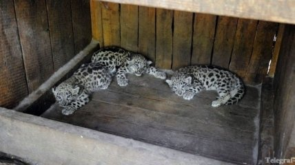 Тигрят и ящеров пытались вывезти контрабандисты из Вьетнама