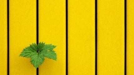 Рай для глаз: перфекционизм в снимках природы (Фото)
