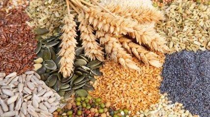 Эксперты рассказали о пользе семян растений для организма человека