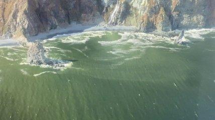 В Арктиці знайшли водорості, з яких можна робити бензин