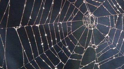 Ученые синтезировали паутину из бактерий