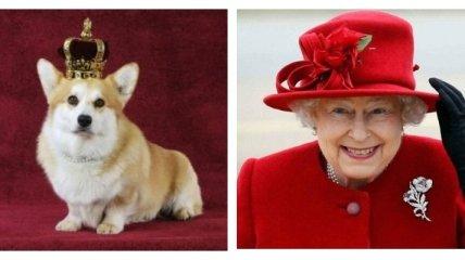 С кризисом помогут щенки: Елизавета II завела новых корги после госпитализации супруга