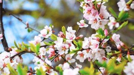Какой праздник 15 марта: народные приметы и запреты