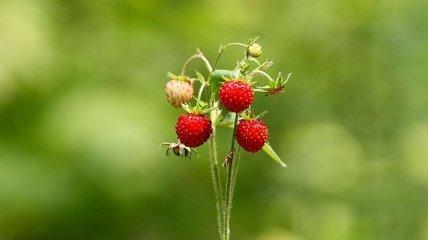 Все о пользе и калорийности летних фруктов