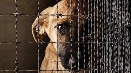 Живодерам несдобровать: в Украине усилили наказания за жестокое обращение с животными