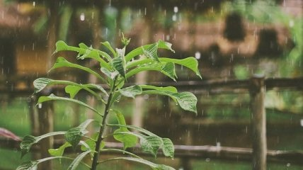 """Дожди и грозы: чем """"удивит"""" погода сегодня 31 мая"""