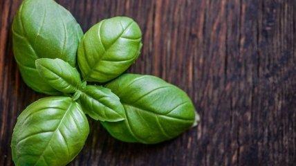 """Впечатляющий список питательных веществ: чем так """"хорош"""" базилик"""