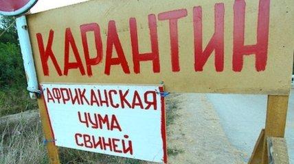 В Одесской области выявили африканскую чуму свиней, объявлен карантин