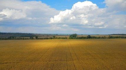 Продажа земли: что об этом думают украинцы