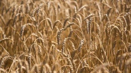 Украина экспортировала почти 20 млн тонн зерна