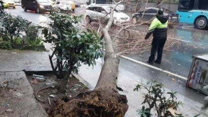 Ураган в Стамбуле сорвал крыши и повалил деревья: туристов предупредили об угрозе (Фото, Видео)
