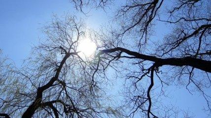 Завтра в Украине будет весеннее тепло