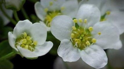 Удивительные растения, снятые в режиме макросъемки (Видео)