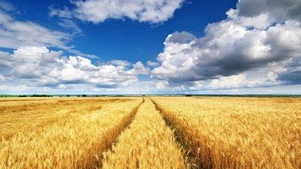 Спека посилиться, але не всюди: яку погоду очікувати в Україні наступного тижня