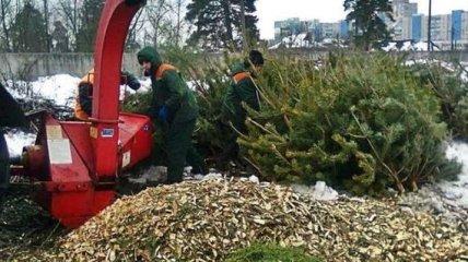Киевлянам рассказали, куда приносить новогодние елки