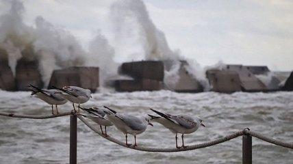 Бушующее море в Одессе: появились красочные фото осеннего шторма