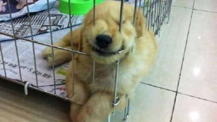 Забавные животные, которые смогут подарить вам улыбку