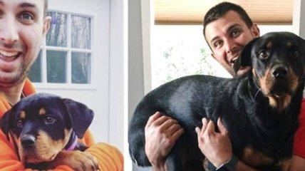 Хвостатые, которые выросли: забавные фото с собаками