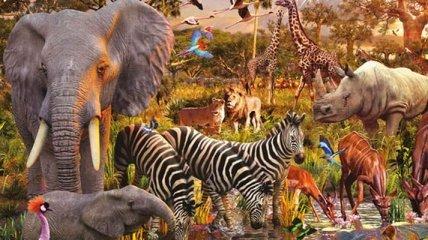 ООН предупредила, что к 2100 году в Африке вымрет половина видов животных