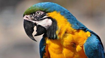 Адский смех сделал попугая звездой YouTube (Видео)
