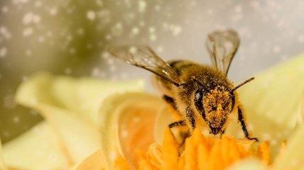 Пчелы обречены: ученым удалось выяснить, почему разрушаются пчелиные семьи