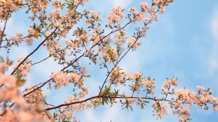 Яке свято 20 травня: народні прикмети і заборони