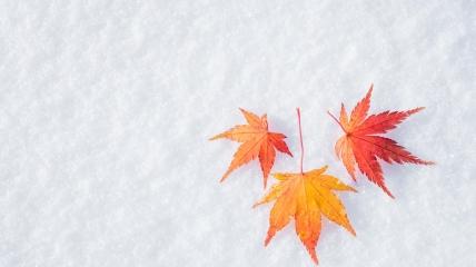 Во второй половине октября может пойти снег в Карпатах