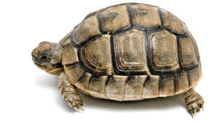 320 черепах пытался вывезти из Мексики российский студент