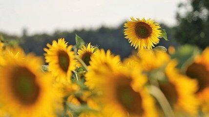 Тепло не хочет отпускать: прогноз погоды на последний день лета