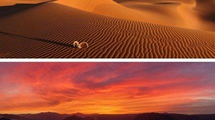 Красочные панорамы пустыни Сахара (Фото)