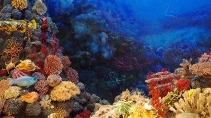 Коралловые рифы могут потерять половину кораллов из-за циклонов