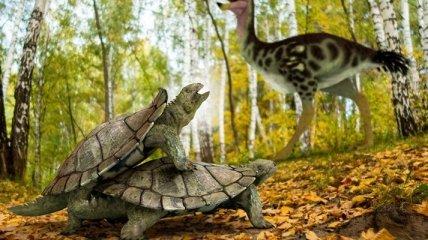 Пережила массовое вымирание: найдены останки древней черепахи
