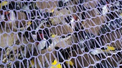 Сотни тысяч диких птиц вывезли из Украины на паштет в арабские страны: одну партию смогли спасти