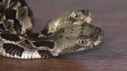 Двухглавую змею обнаружили в лесу США