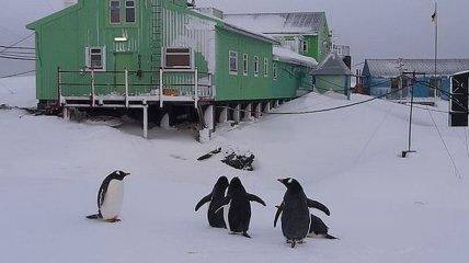 Аномальная зима в Антарктиде: на станцию Академик Вернадский вернулись пингвины