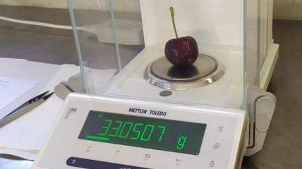 В Италии ягода вишни установила мировой рекорд по размеру: сколько она весит (фото)