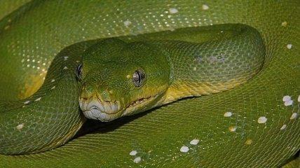 ТОП 10: Самые большие змеи в мире (Фото)