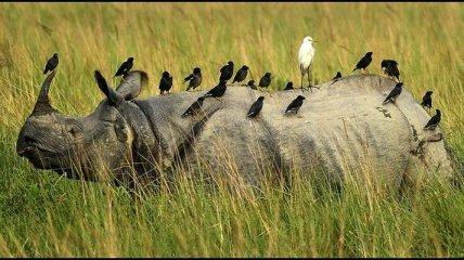 Увлекательная жизнь животных из разных уголков мира (Фото)