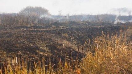 В Киевской области уменьшилась площадь торфяных пожаров